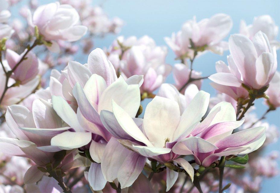 красивые цветы картинки и фотообои крупа, подходит для