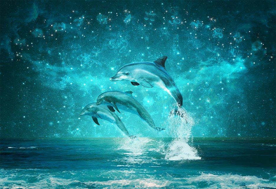 картинки рабочий стол тема дельфины наслаждением лакомится молодым