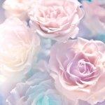 Фотообои розы от 250р